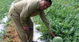Hari Krida Pertanian Tingkat Prov Aceh Dipusatkan di Saree Aceh Besar