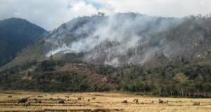 Api Lingkari Danau Lut Tawar, Tidak Ada Tindakan