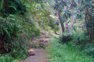 Jalan setapak menuju kebun Warga Desa Bies Pilar yang terkena longsor (LGco-Ria D)