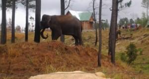 Puluhan Gajah Duduki Kampung Transat Pintu Rime Gayo