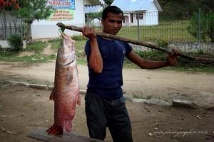 Ikan Kebaro yang termasuk golongan ikan Tor yang tertangkap dikawasan Linge - Aceh Tengah