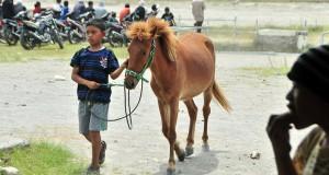 Pacu Kuda Batal atau Diundurkan, Ini Pendapat Pengamat Peternakan Kuda Gayo
