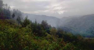 """Kadis Bunhut Bener Meriah """"Berang"""" Kawasan Hutan Lindung Dirambah Ratusan Hektar"""