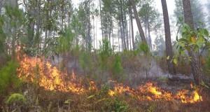 Kebakaran Lahan di Linge, Kerbau Terancam Kelaparan