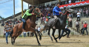 9-15 Oktober, Ada Pacuan Kuda di Gayo Lues