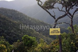 Taman Nasional Gunung Leuser. (Adwin Maulana)