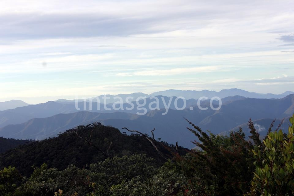 Taman Nasional Gunung Leuser. (Adwein Maulana)