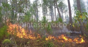 Kemarau! Jangan Main Api di Hutan Linge
