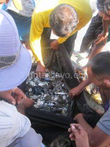 Nelayan mengumpulkan hasil melaut yang terjaring di pukat.(LGco-Zuhra Ruhmi)
