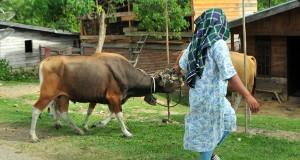 Di Aceh Harga Daging Stabil dan Kebutuhan Tercukupi