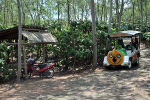 """Kereta """"taft badak"""" angkutan mengelilingi kebun kopi Banaran"""
