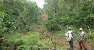 Dirjend Perkebunan RI Bantu 900 Hektar Lahan Kopi Arabika di Gayo