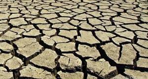 Kemarau sebabkan hasil pertanian di Gayo Lues merosot tajam
