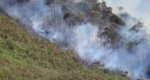 Wagub Aceh : Tindak Tegas Pembakar Hutan
