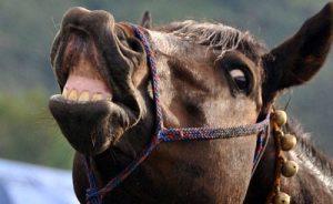 Kuda nyengir (Doc. Kha A Zaghlul)