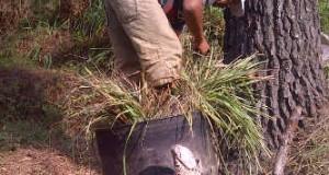Penyulingan minyak Sere secara tradisional ancam keselamatan hutan