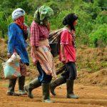 Ulak ari empos : Pulang dari kebun