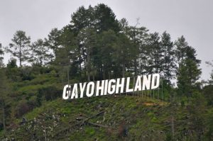 Gayohigland1