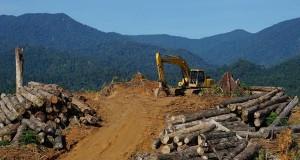 Aktivitas perusahaan Malaysia di hutan Leuser bikin puluhan gajah mengamuk