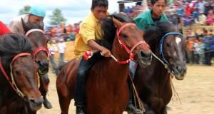 Kuda-kuda Aceh Tengah lindas kuda Bener Meriah dan Gayo Lues
