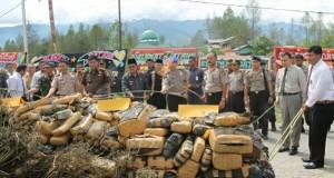 Kapolda Aceh Musnahkan 732 Kg Ganja Gayo Lues