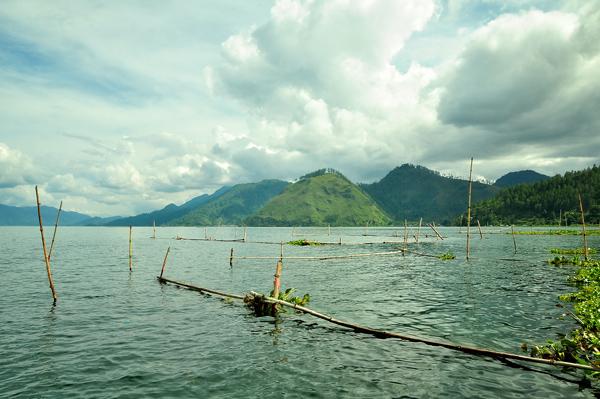 Potongan batang bambu yang sengaja dipasang untuk memelihara tumbuhan air eceng gondok