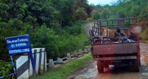 [foto] Mobilisasi Ternak di Linge