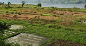 Pertanian, Kekuatan Utama Pembangunan Wilayah Tengah Aceh