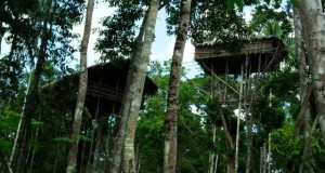 Kenawat itu artinya Rumah di Atas Pohon