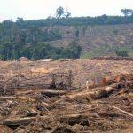 Kementerian Lingkungan Hidup Perkenalkan Hutan Sosial  Aceh