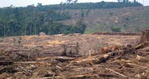 KPHA Gelar FGD Bedah Kasus Dugaan Korupsi Penyusunan Dokumen Kehutanan Aceh