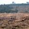 Kerusakan Hutan Aceh 290 Ribu Ha; Gayo Lues 1.401 Ha