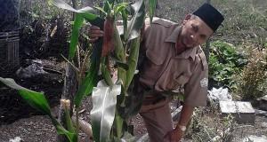Penyuluh Pertanian Harus Punya Media Sendiri