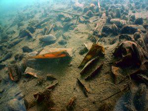 Kondisi Perairan Dasar Danau Lut Tawaf. (Foto : Muna)