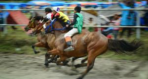 22-28 Februari 2016 Pacuan Kuda Gayo Dihelat di Takengon