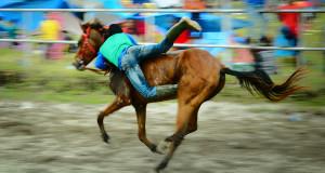 3 Jam dari Jakarta sudah Bisa Nonton Pacuan Kuda di Gayo