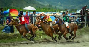 Tambahan Kelas AB dan C 800 M, Pacuan Kuda Gayo Menuju Pentas Nasional?