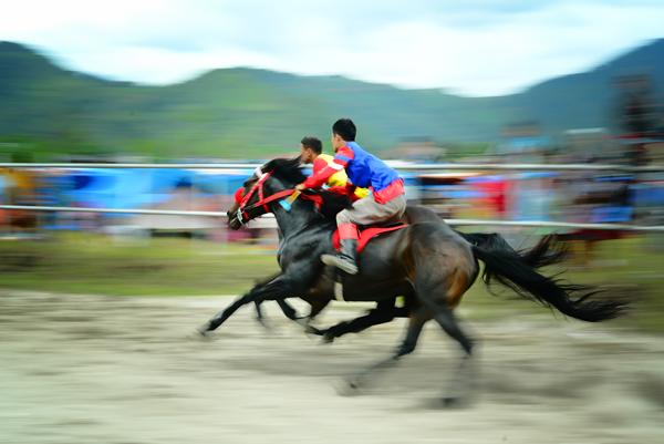 Pacuan Kuda Tradisional Gayo tahun 2015. (LGco : Muna)