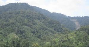 Warga Minta Ilegal Logging di Hutan Pining Dihentikan