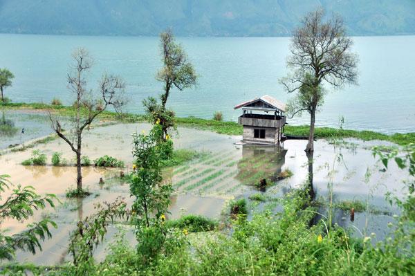 Tanaman warga terbenam Lemo di Birah Panyang. (LGco_Munawardi)