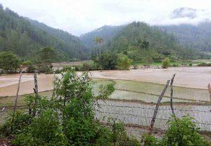 Sawah Tergenang Air di Isaq Kecamatan Linge Akibat Curah Hujan Tinggi. (Foto Kiriman Pembaca/Yuliya Syahruranti)