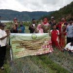 Rawe Lut Tawar Hasilkan 6-7 Ton Bawang Merah Per Hektar
