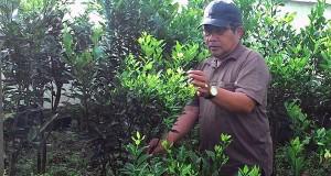 Zikriadi, Pejabat Kebersihan Sang Penangkar Bibit Tanaman