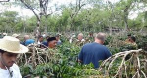 Poktan di Bener Meriah Tolak Bibit Kopi dari Disbun Aceh