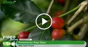 [Video] Tingkatkan Produktivitas Tanaman Kopi dengan Pemangkasan