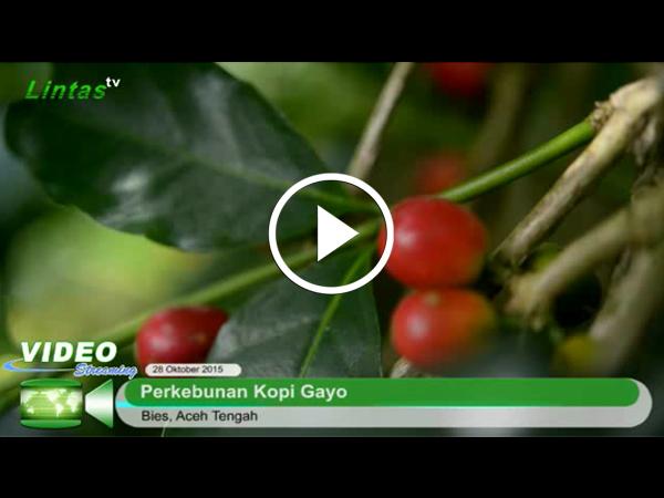 pangkaskopi_video