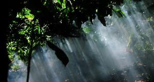 Misteri Padang Seri Bulen, dari Kematian Manti hingga Hutan Berzikir
