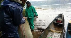 Musim Depik, Nelayan di Nosar Lut Tawar Sumringah