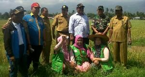 Dinas Pertanian Agara Lakukan Gropyok Tikus di 3 Kecamatan