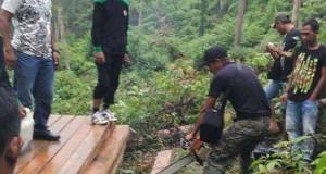 Pamhut Gayo Lues Temukan Illegal Logging